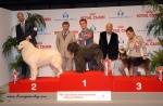 Podio Gruppo 1 Esposizione Internazionale MIlano 2013. Vincitrice:Femke-Loes vd Vaneblikhoeve ( HDA-ED0)